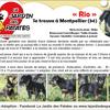 Rio, Chiot berger allemand, beauceron à adopter