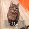 Aby, Chat à adopter