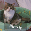 Mercy, Chat à adopter