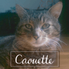 Caouette, Chat à adopter