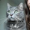 Yoko, Chat à adopter