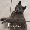 Mogwaï, Chat à adopter