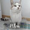 Pilou, Chaton à adopter