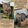 Magnum, Chat à adopter