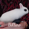 Bilbao, Animal à adopter
