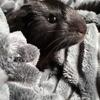 Anzu, Animal à adopter