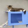 Bijou, Chat européen à adopter