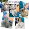 Popeline, Animal à adopter