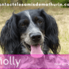 Molly, Chien à adopter