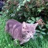 Nino, Chat à adopter