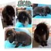 Edgar, Animal à adopter