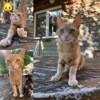 Mira, Chat à adopter