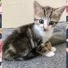 Avada, Chaton à adopter