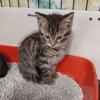 Elmer, Chaton à adopter