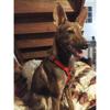 Choka, Chiot à adopter