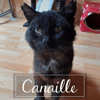 Canaille, Chaton à adopter