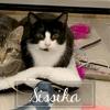 Sissika, Chaton à adopter