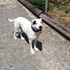 Phénix, beau chien mâle de 3 ans, Chien à adopter
