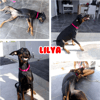 Lilya chienne en guadeloupe, Chien à adopter