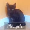 Maupiti, Chaton à adopter