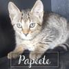 Papeete, Chaton à adopter