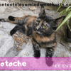 Totoche, Chat à adopter