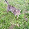 Kirikou, Chat à adopter