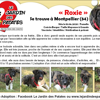 Roxie, Chiot à adopter