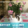 Kat'cat, Chat à adopter