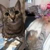 Nola, Chat à adopter