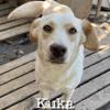 Kuka sterilisee a sauver de sotchi, Chien à adopter