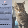 Minette, Chat à adopter