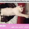 Panda, Chaton à adopter