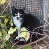 Dakota, Chat à adopter