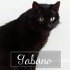 Gabano, Chat à adopter