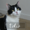 Dolco, Chat à adopter
