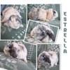 Estrella, Animal à adopter