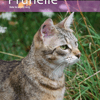Prunelle, Chat à adopter