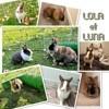 Lola et luna, Animal à adopter