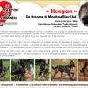 Keegan, Chiot berger hollandais à adopter