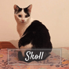 Skoll, Chaton à adopter