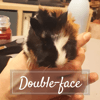 Double-face, Animal à adopter