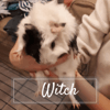 Witch, Animal à adopter
