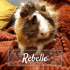 Rebelle, Animal à adopter