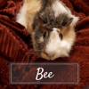 Bee, Animal à adopter