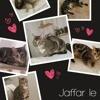 Jaffar, Chaton à adopter