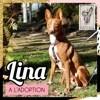 Lina, Chien podenco canario à adopter