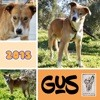 Gus, Chien à adopter