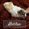 Atelstan, Animal à adopter