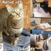 Prisca et compagnie, Chat européen à adopter